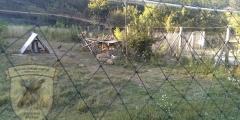 Розведення фазана в господарствах
