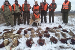 Hunting with husky on pheasants 01/08/2016 year